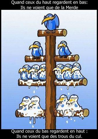 """Cette illustration plutôt connue évoque assez bien les difficultés dans les rapports hiérarchiques. Elle illustre aussi bien le sentiment que laisse l'approche """"Top-Down""""."""